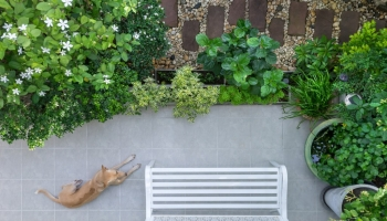 Things to consider when creating a pet-friendly garden