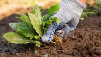 5 ways to improve your garden during the lockdown period